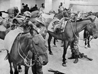 1979 Feb. Mounted Unit 4